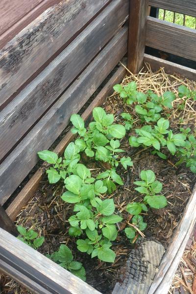 planting in crates