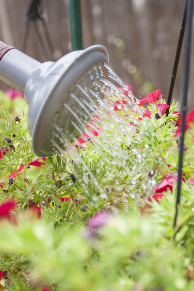how to fertilize hanging baskets