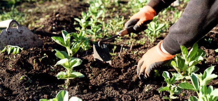 stop garden weeds