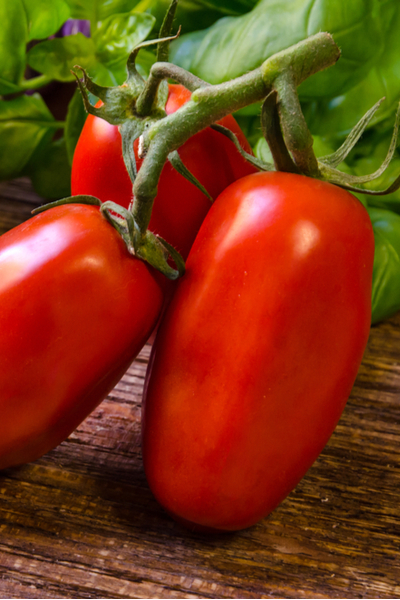 the best all purpose tomato you can grow