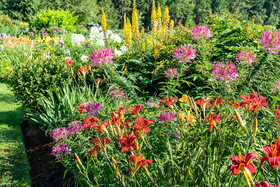 how to divide perennials in the summer