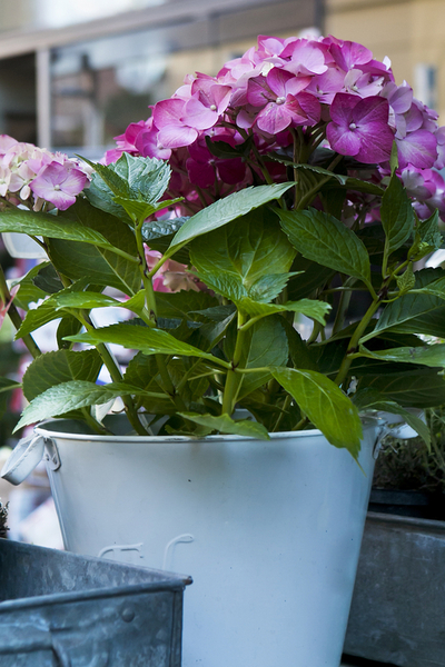 create gorgeous planters