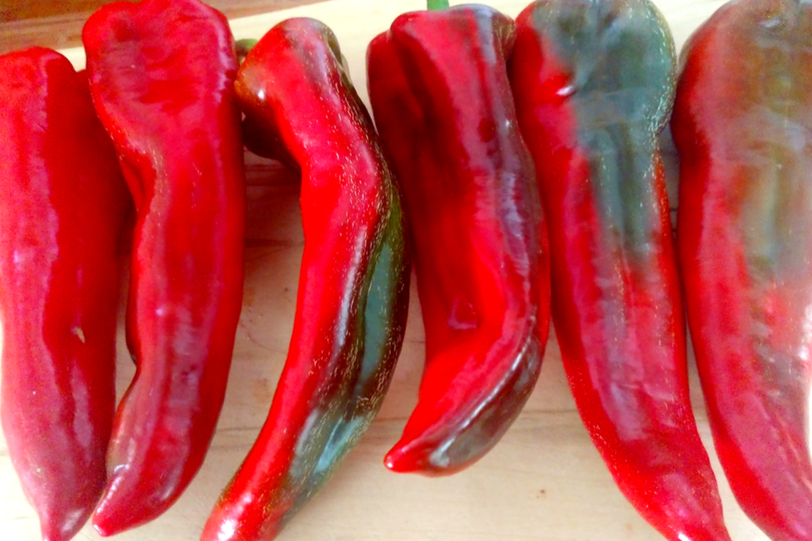 best sweet red pepper ever