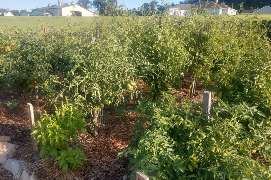 garden cover crops