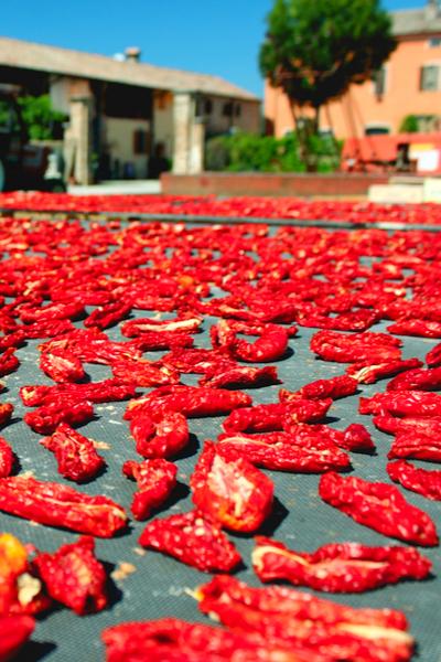 tomatoes sun drying