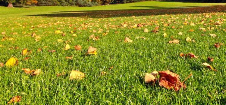 3 Fall Lawn Chores