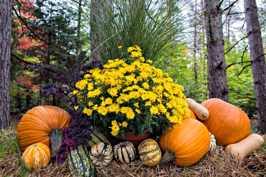autumn compost pile