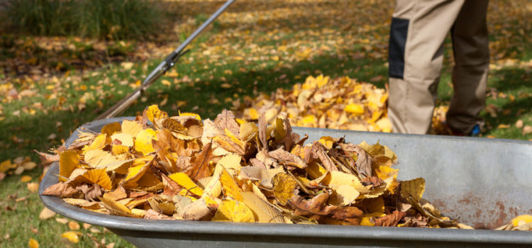 how to compost leaves