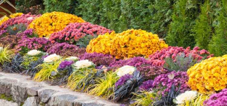prepare flowerbeds for winter