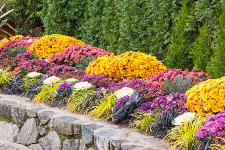 prepare flowerbeds for winter