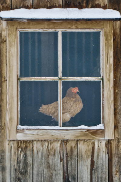 window on a chicken coop