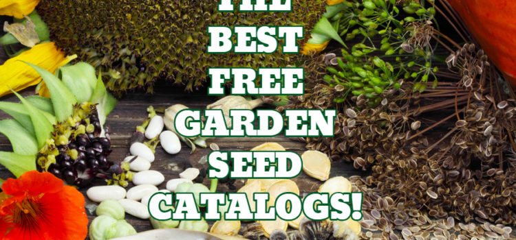 The Best Free Garden Seed Catalogs To Order Now For Winter Dreaming!