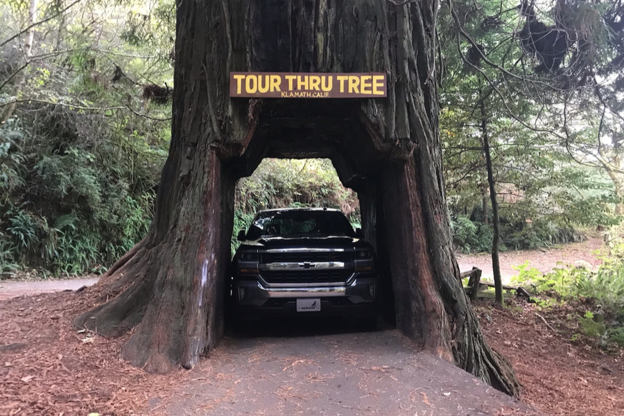 truck through the redwood tree