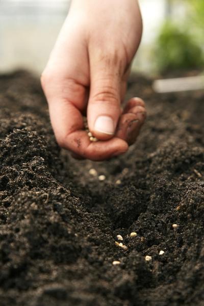 Summer planting - vegetable garden