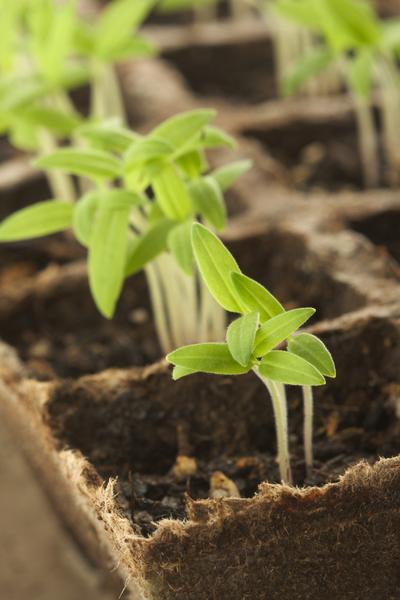Free Garden Seed Catalogs
