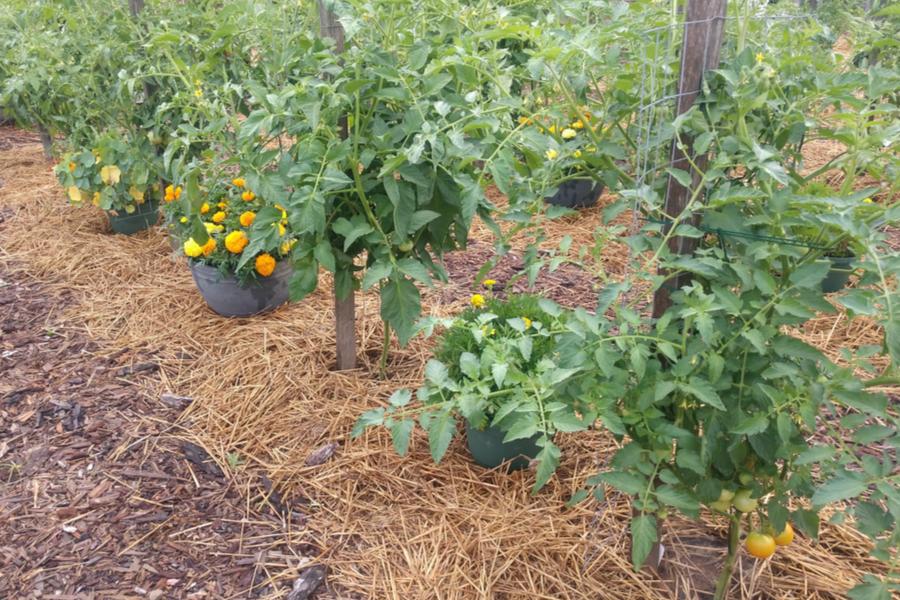 weedless garden
