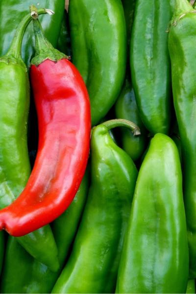 Aneheim Chili Pepper - Perfect Pepper Plants