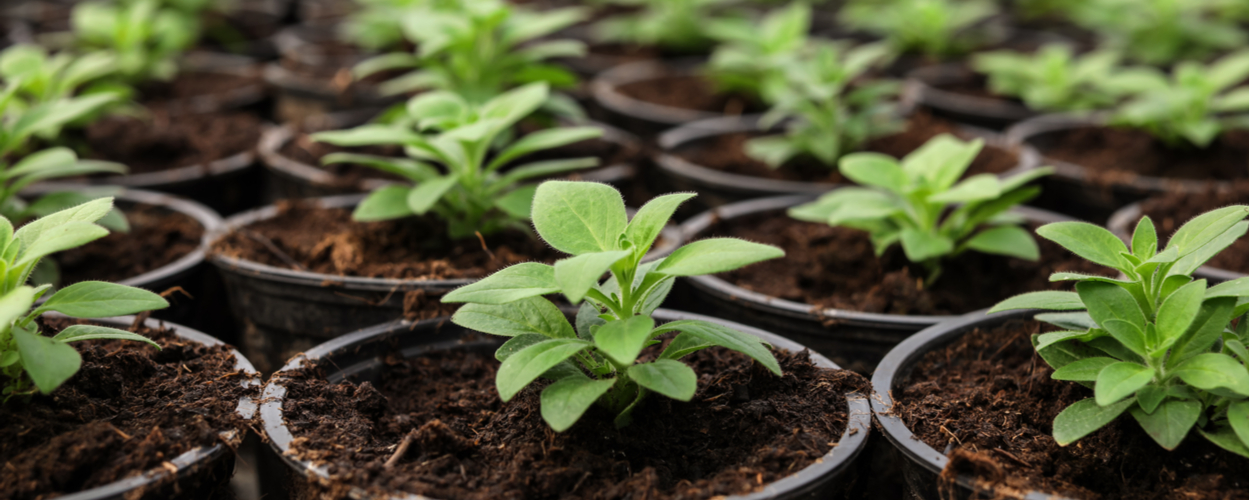 Starting Seeds Indoors!