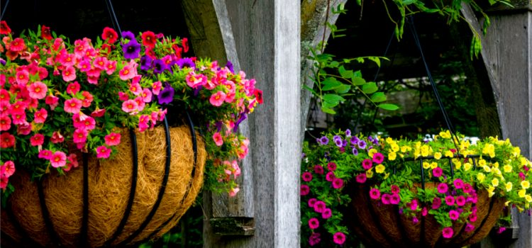 keep hanging baskets beautiful