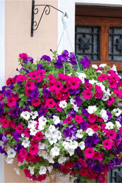keep hanging baskets beautiful