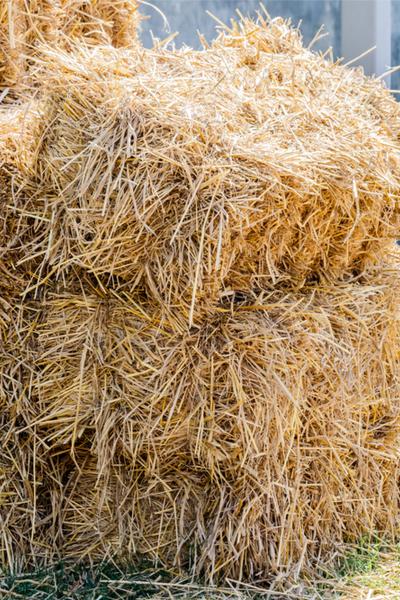 growing vegetables in straw bales