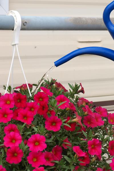 watering a hanging basket