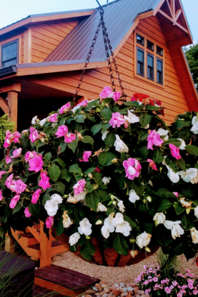 using worm castings - hanging baskets