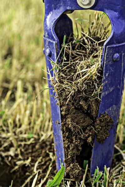 Planting annual rye