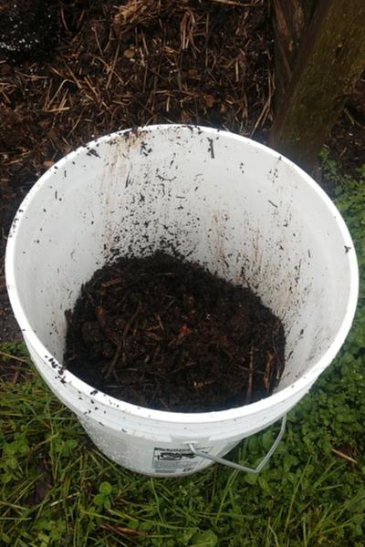 5 gallon buckets - make and use compost tea