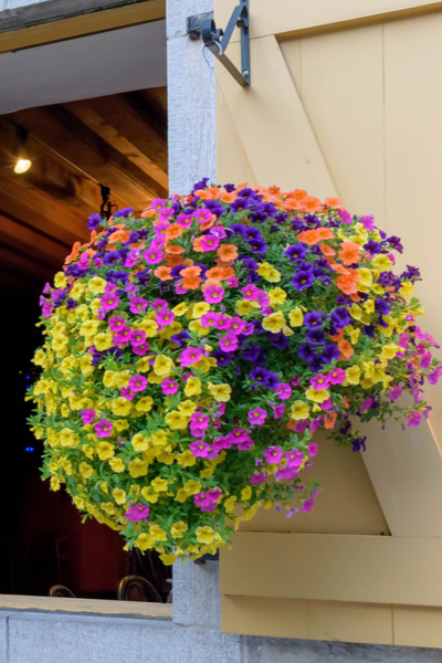fertilizing hanging baskets