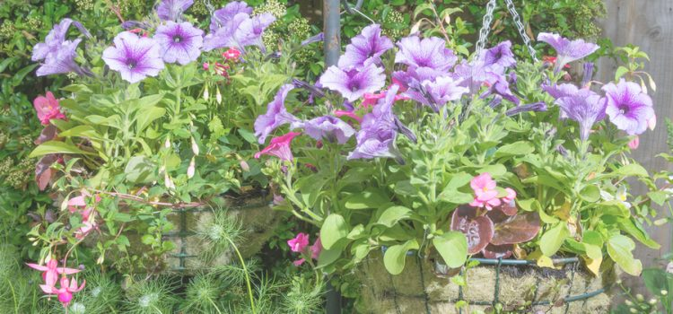 save struggling hanging baskets