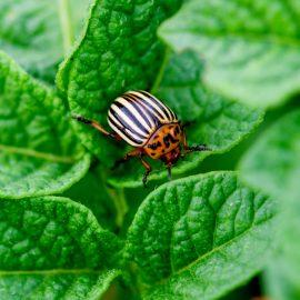 pest free garden