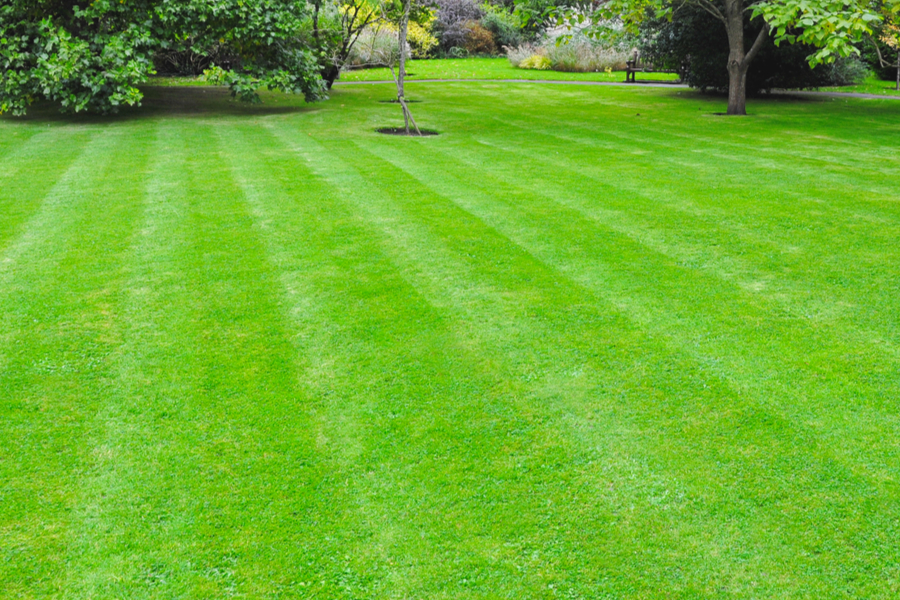 7 Simple Secrets To A Great Lawn Without Using Chemicals Sprays