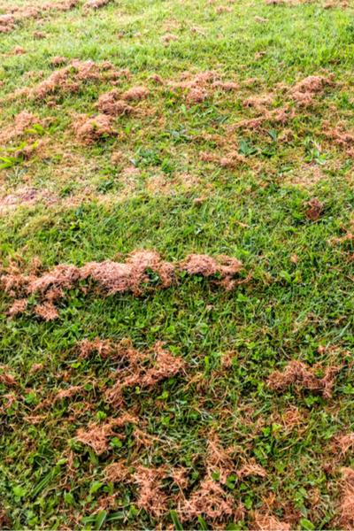 clumped grass