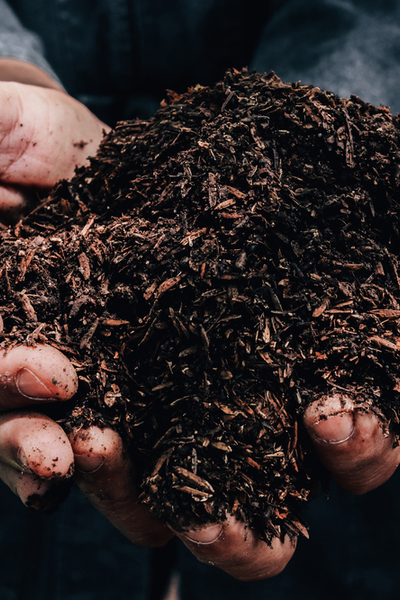 compost as fertilizer