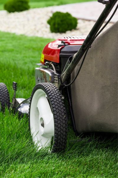 secrets to a great lawn