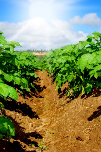 fertilize garden plants