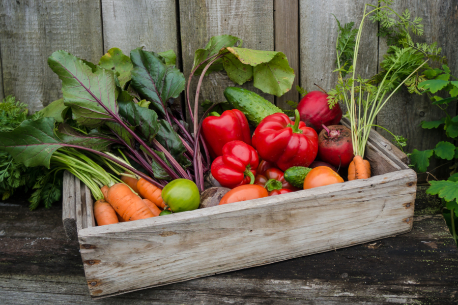 healthy vegetable garden