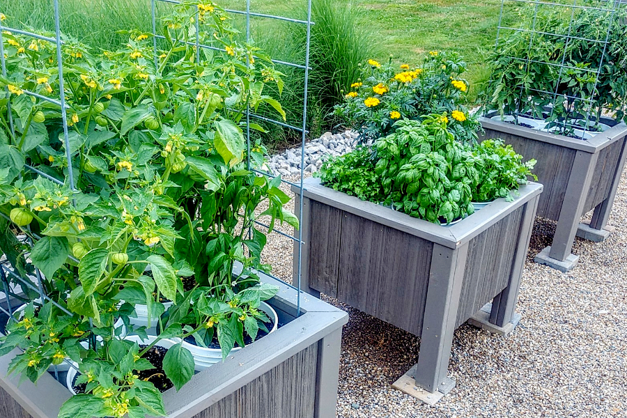 Patio vegetable garden - bucket planter box