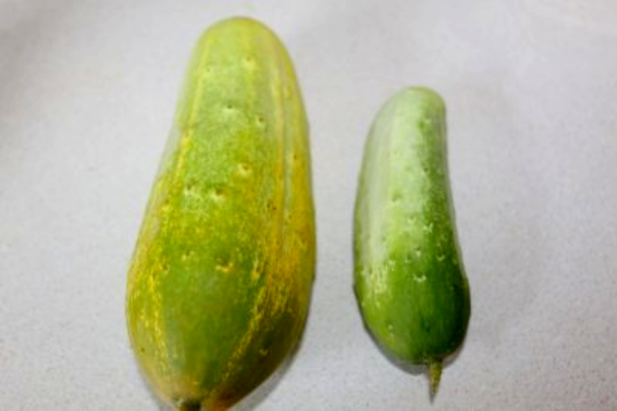 over ripe cucumber