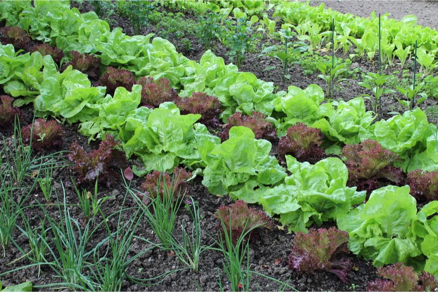 replanting a mid-summer garden