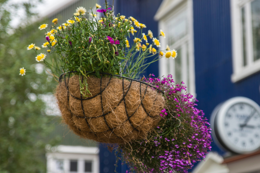 revive worn out hanging baskets