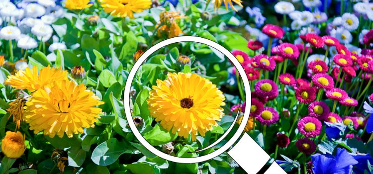 indentifying plants and weeds