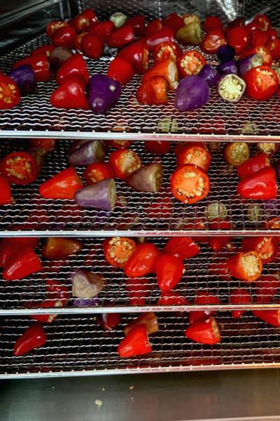 dehydrator peppers
