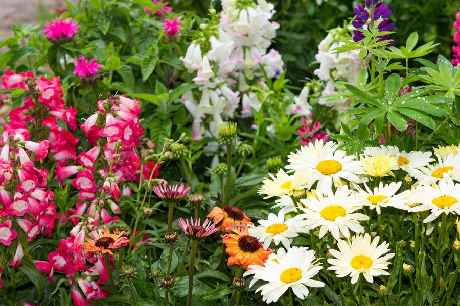 dividing perennials in the fall