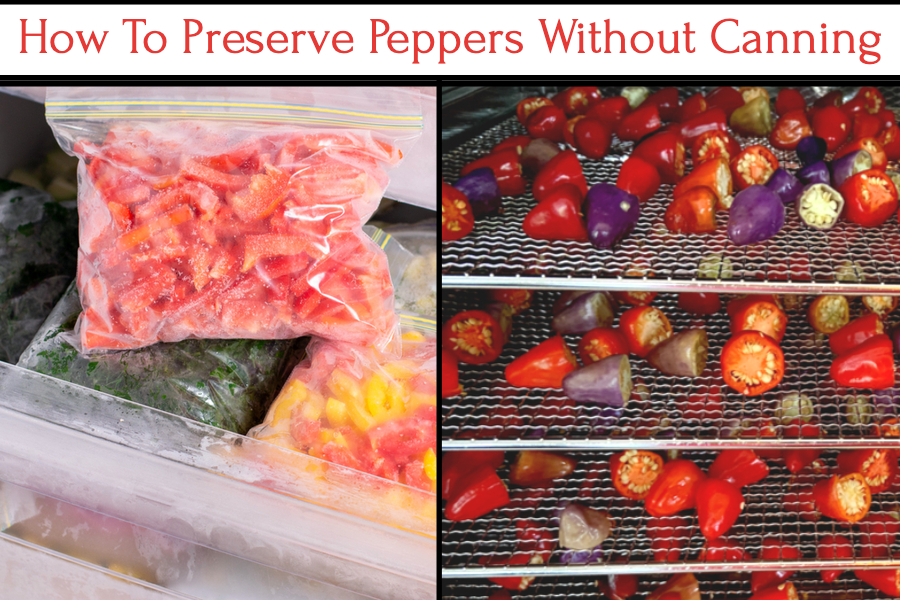 preserve peppers without canning