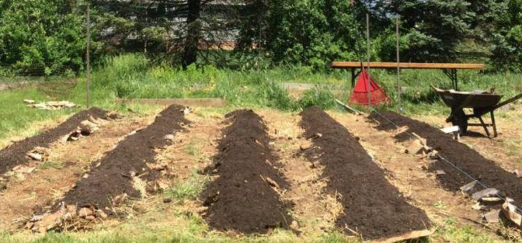 setting up a raised row garden