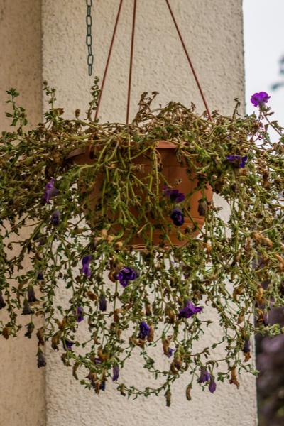 recycle hanging basket soil