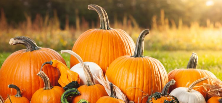 how to make pumpkins last