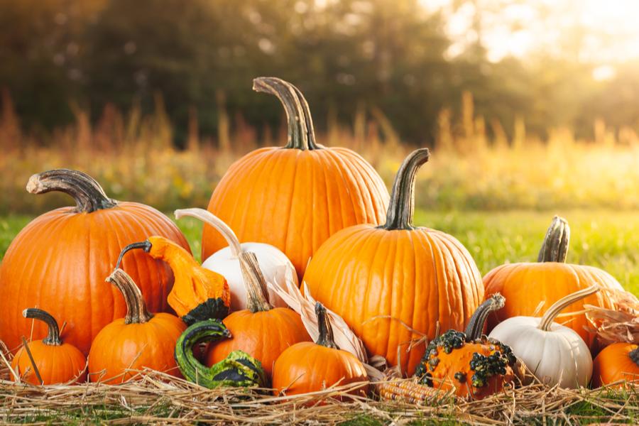 how to make pumpkins last